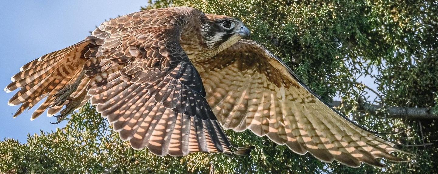 Australian Bird Photography