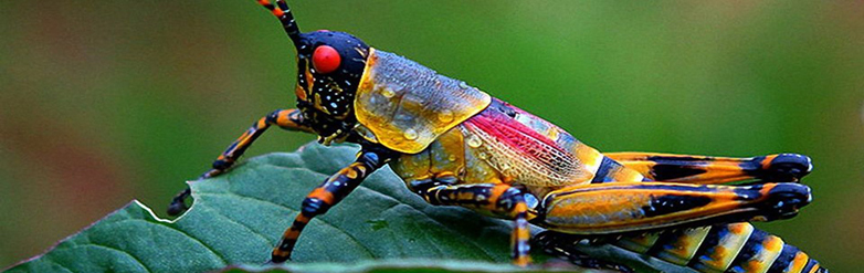 Header for Insect Identification Australia - Pest or Friend - NO SPIDERS